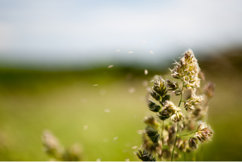 Five Things to do When Seasonal Allergies Attack Your Skin