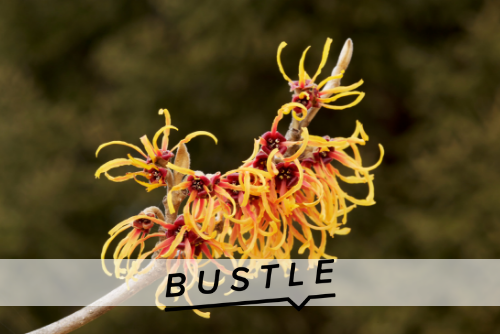 6 Surprising Uses For Witch Hazel